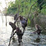 Озеро Каенг Крачан и ныряющие обезьяны