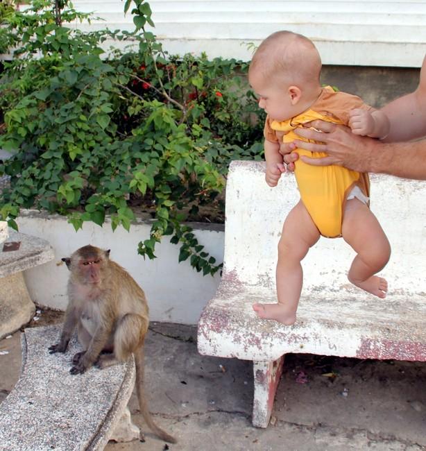 Ребенок смотрит на обезьяну