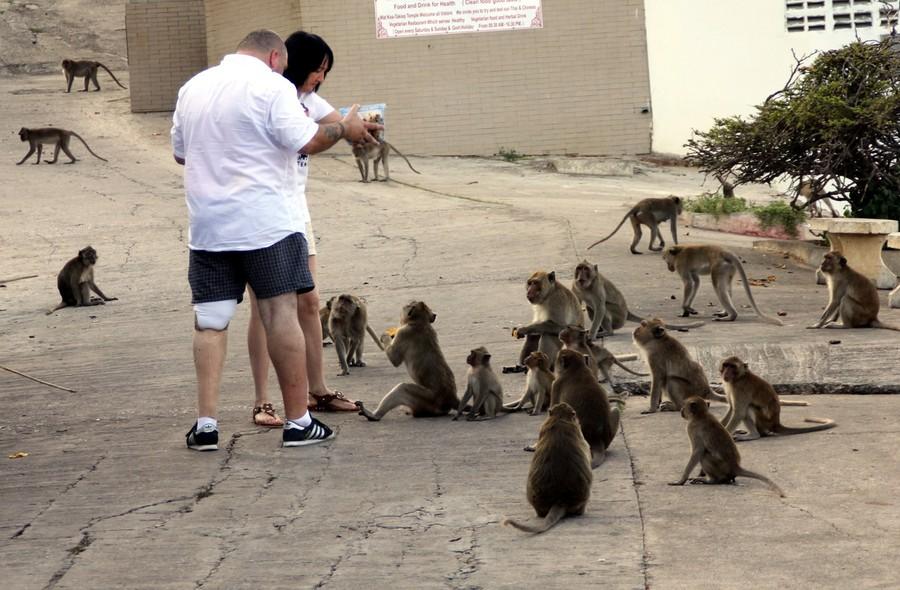 Туристы кормят обезьян
