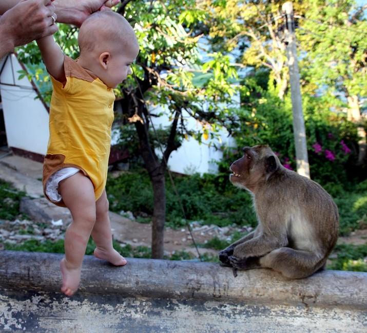 Саша и обезьяна