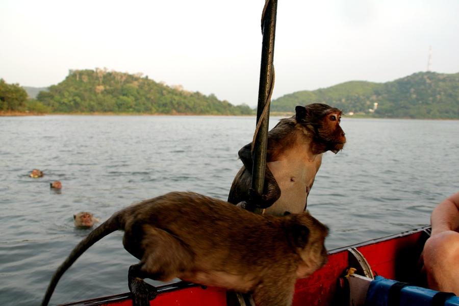 ныряющие обезьяны