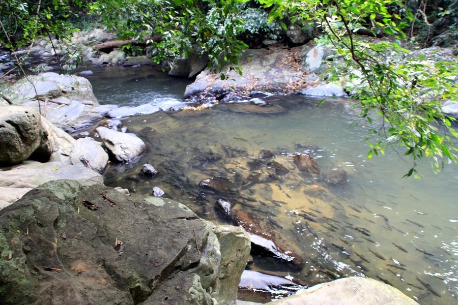 В реке много рыбы
