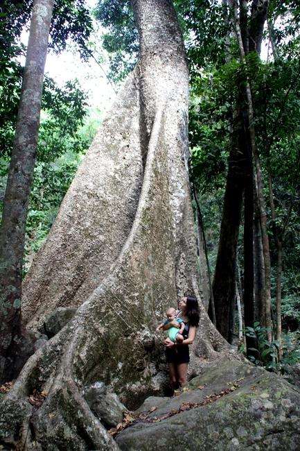 большое дерево
