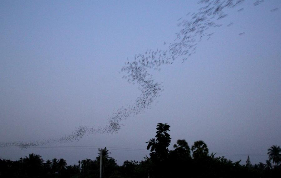Гора летучих мышей в Ча-аме