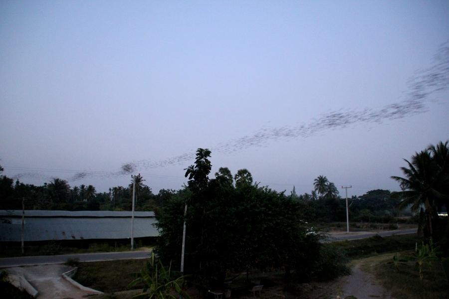 Гора летучих мышей в Хуа Хине