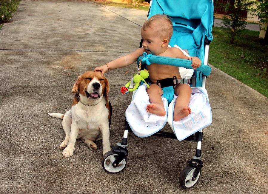 ребенок и собака наших соседей