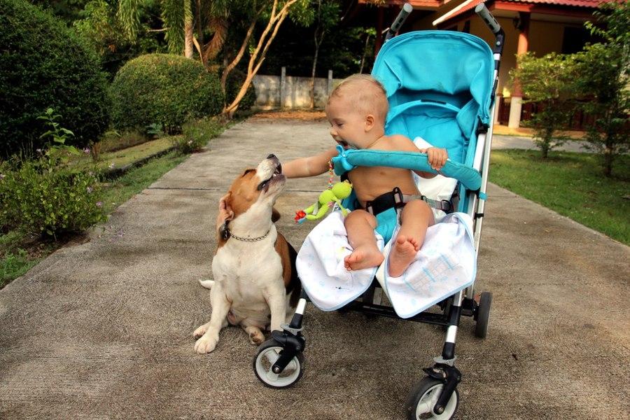 ребенок в коляске и собака