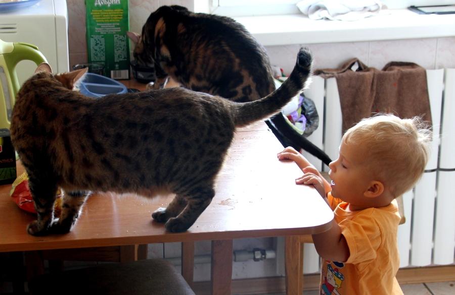 Ребенок увидел котов на столе!