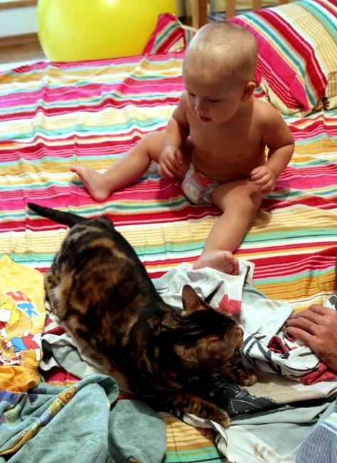 Ребенок и кот