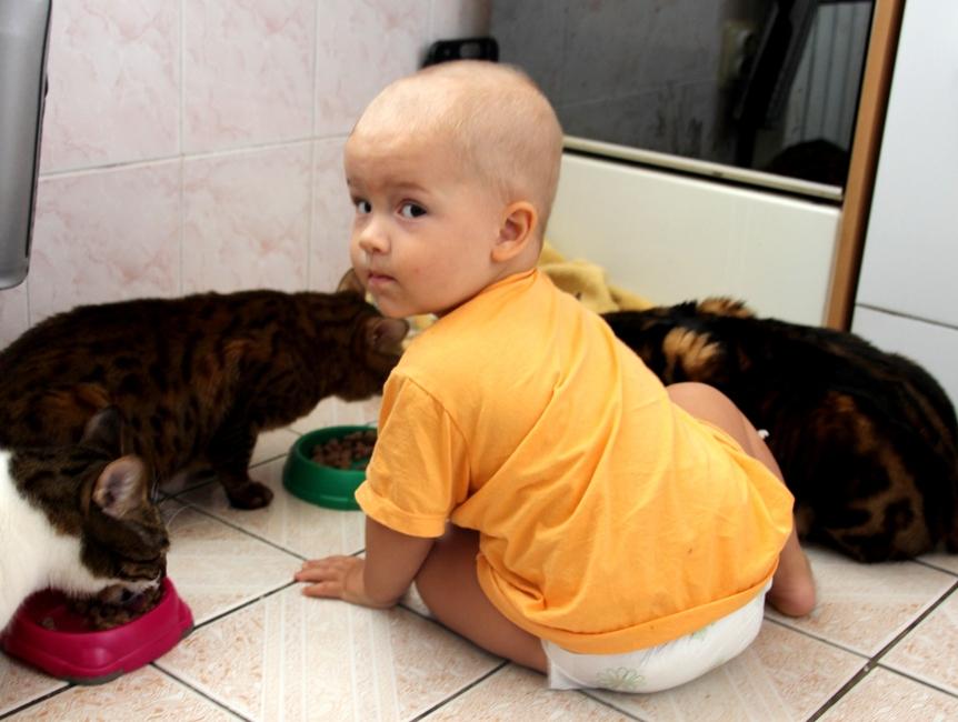 Мальчик смотрит как едят коты