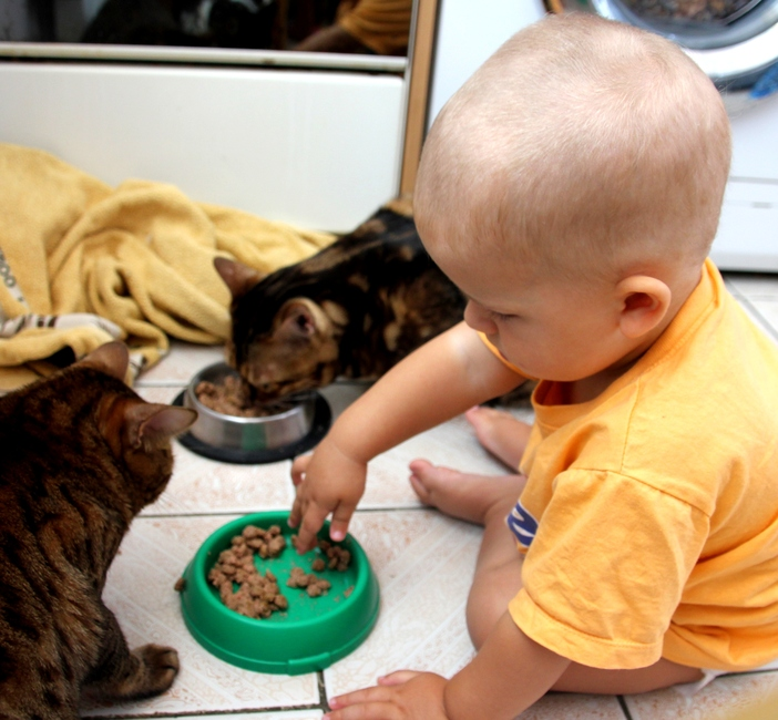 Ребенок 1 год пробует кошачий корм
