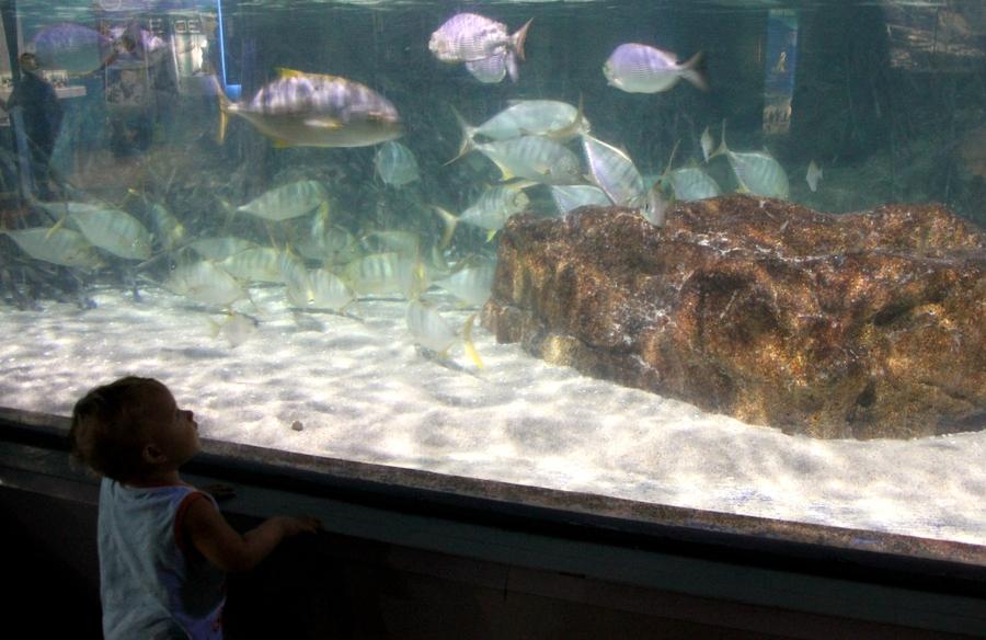 Океанариум Siam Ocean World в Бангкоке