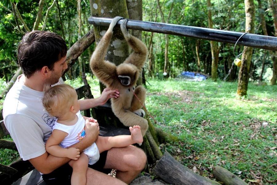 Ребенок и ручная обезьяна