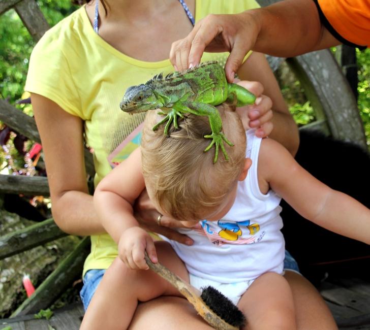 Ящерица на голове у ребенка