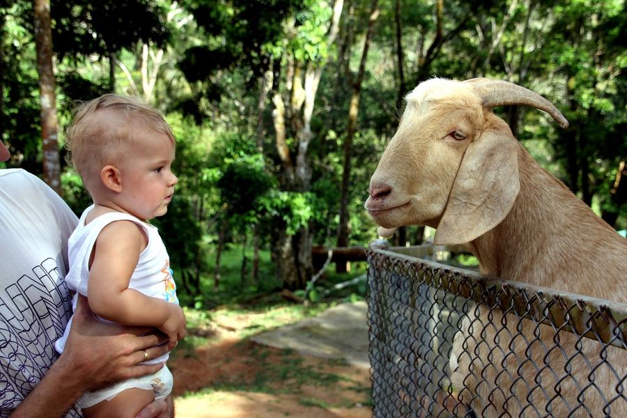 С маленьким ребенком в Тайланде в Paradise Park Farm
