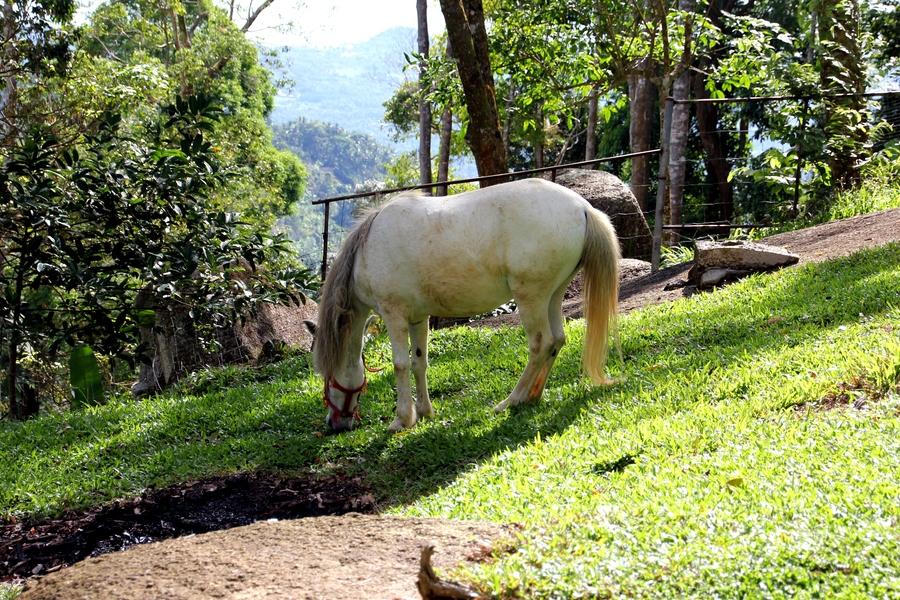 Лошадь в горах в Таиланде