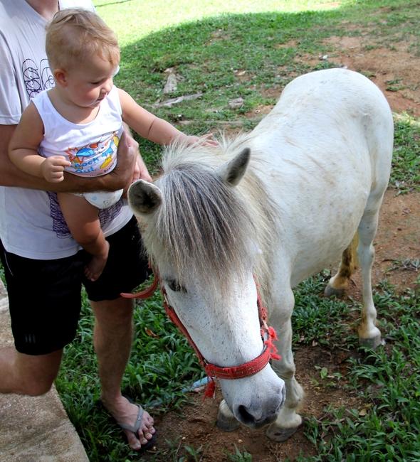 Мальчик гладит лошадь в Paradise Park Farm