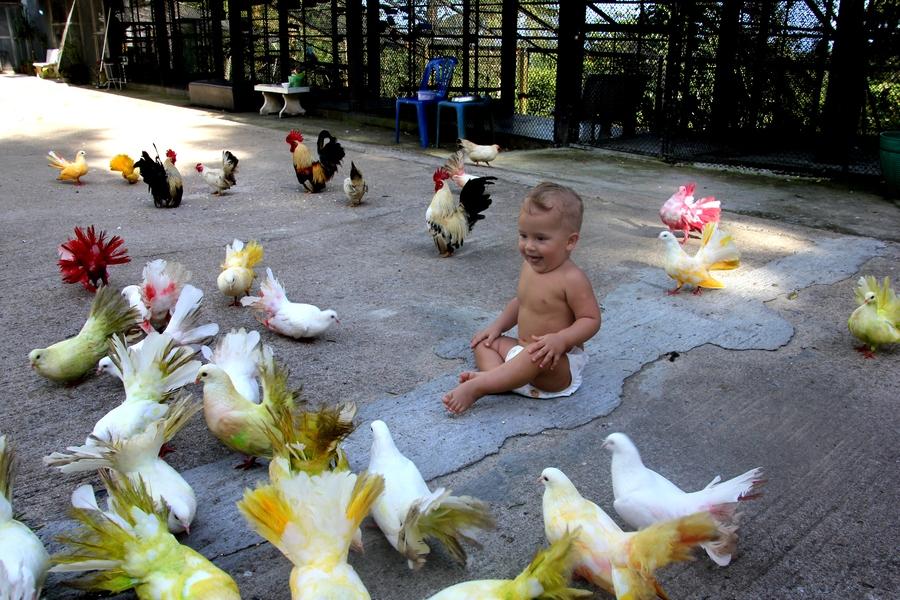 Ребенок и разноцветные голуби