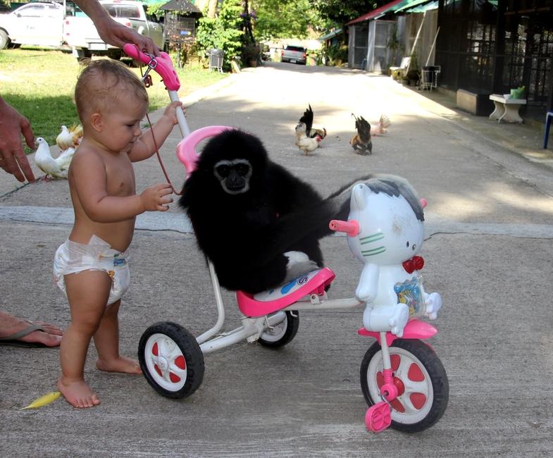 Мальчик катает обезьяну на велосипеде
