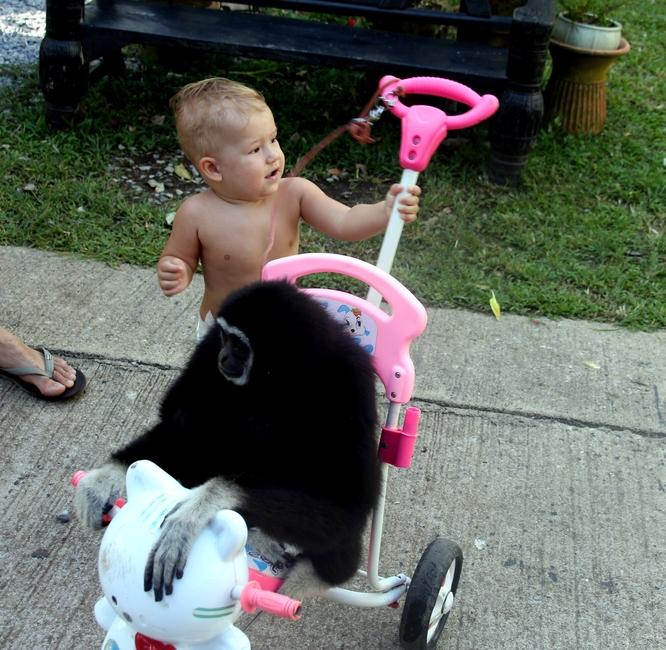 Ребенок катает обезьяну на коляске