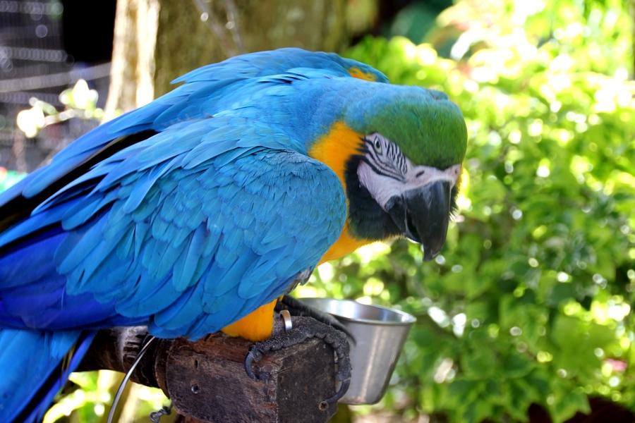 Попугай в Парадайз Парк Фарм