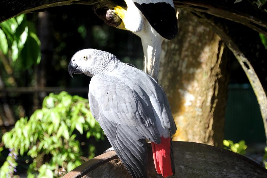Попугай в Paradise Farm Park