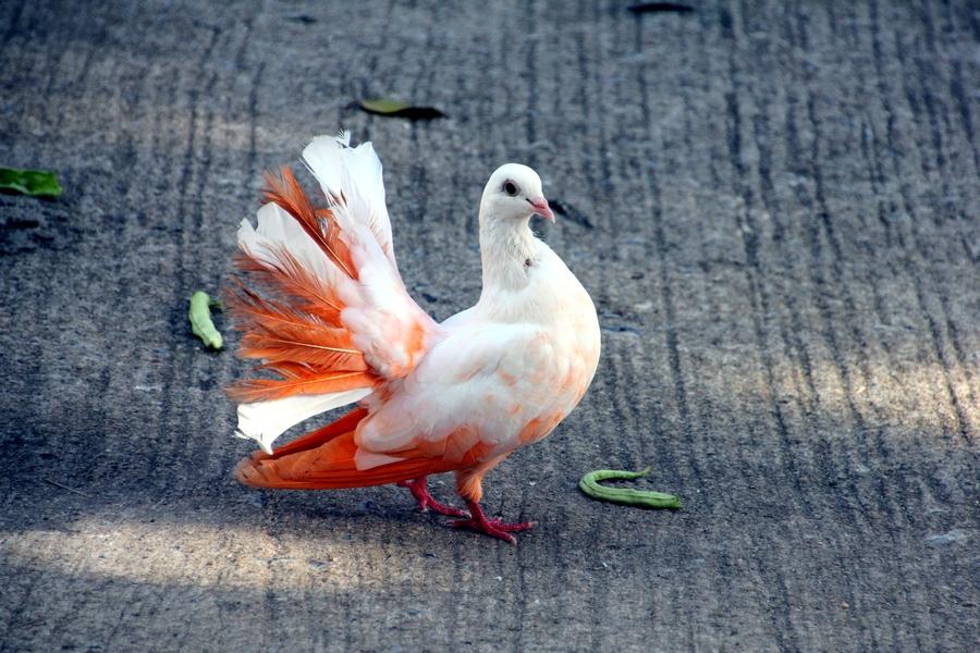 Разноцветные голуби в Парадайс Парке