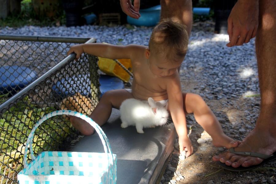 Маленький мальчик играет с белым кроликом