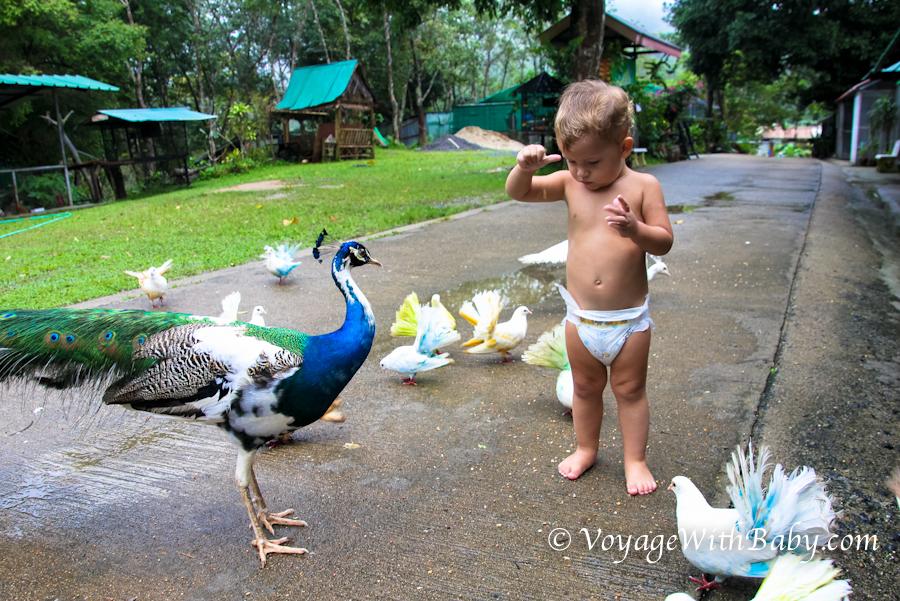 Ребенок в зоопарке на Самуи