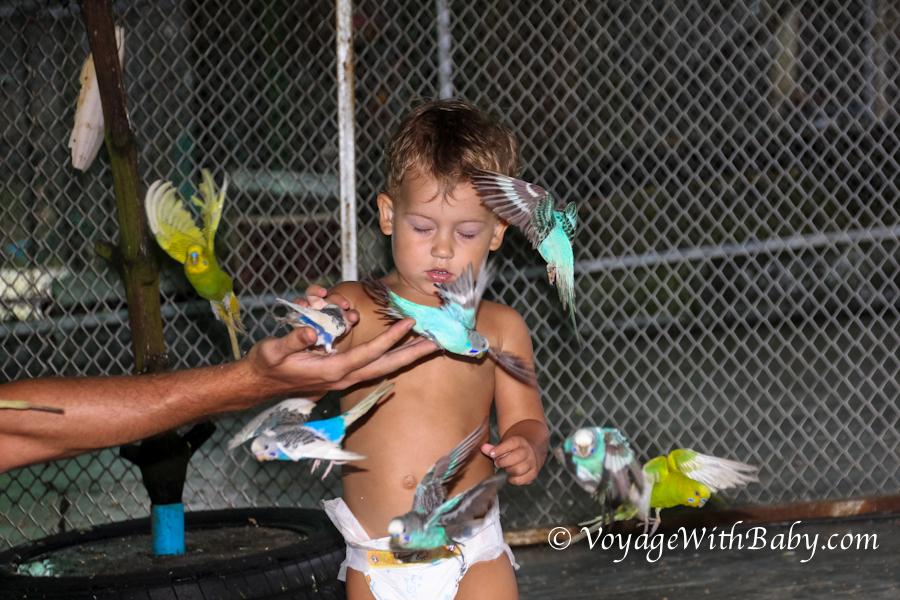 Маленький мальчик и много попугаев