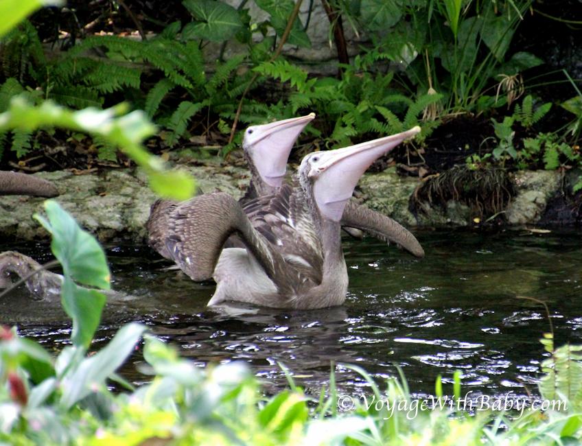 Зоопарк Дусит в Бангкоке
