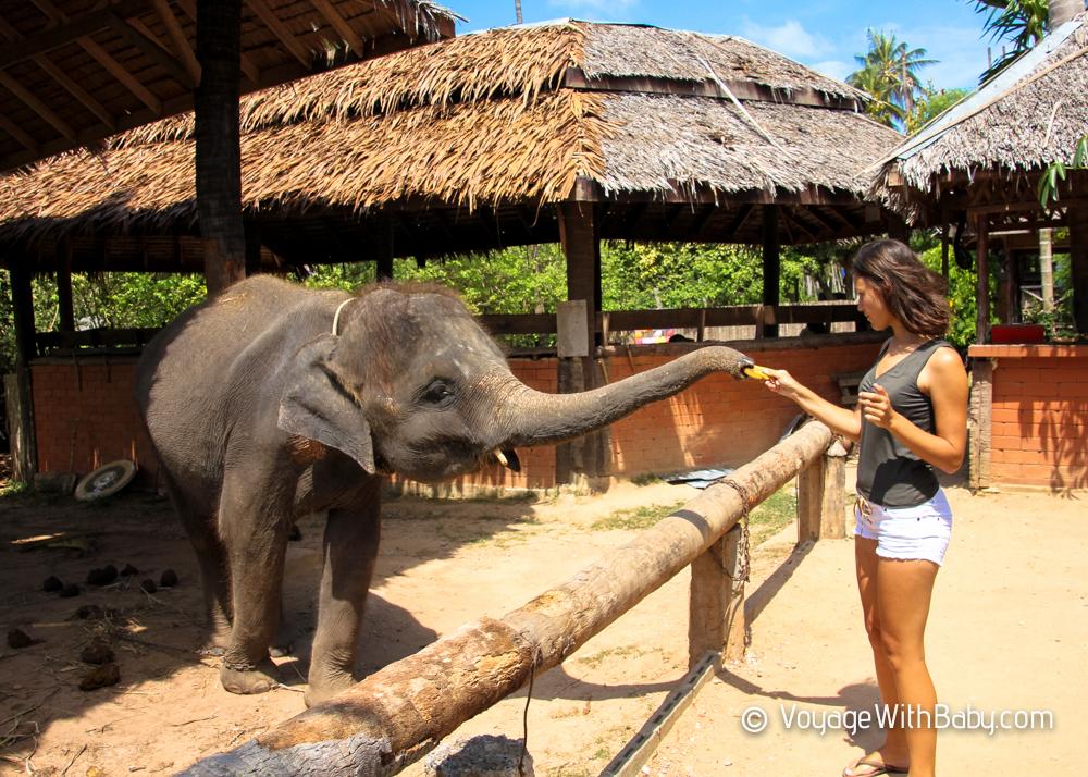 Кормление слоненка на Самуи
