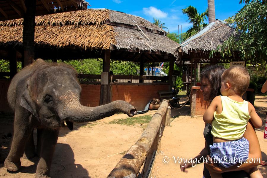 Как мы кормили слоненка в Island Safari на Самуи