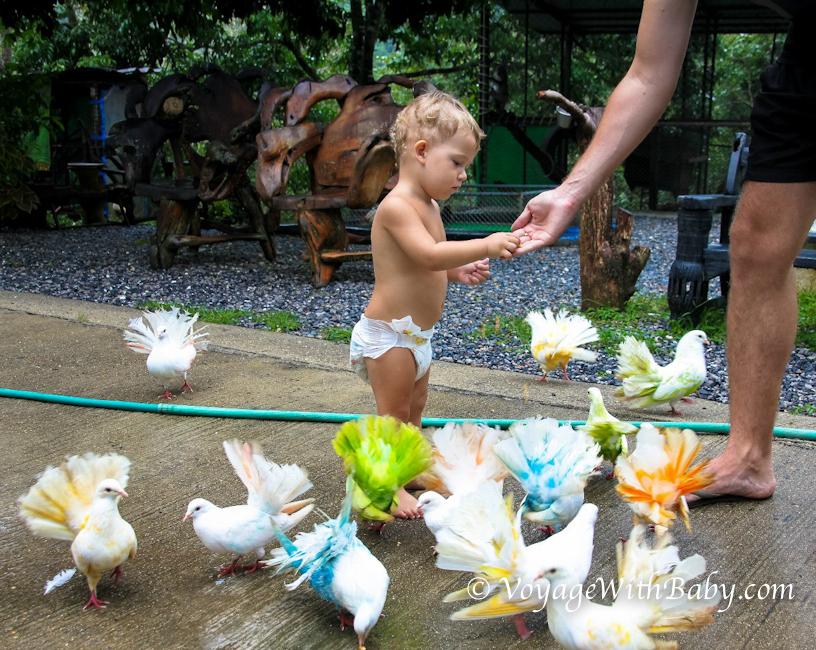 Разноцветные голуби в Paradise Park Farm на Самуи