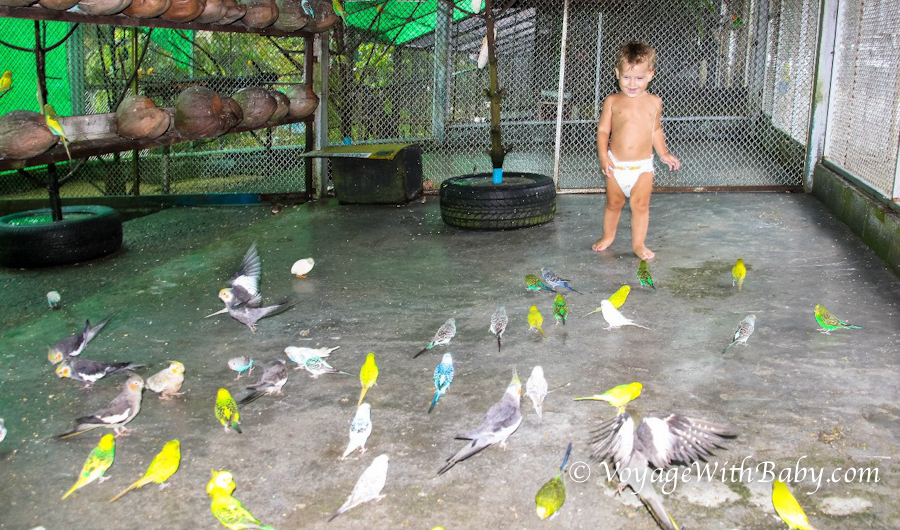 Вольер с попугаями в Парадайс Парке на Самуи
