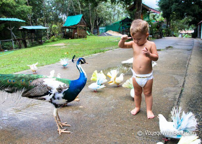 Paradise Park Farm на Самуи