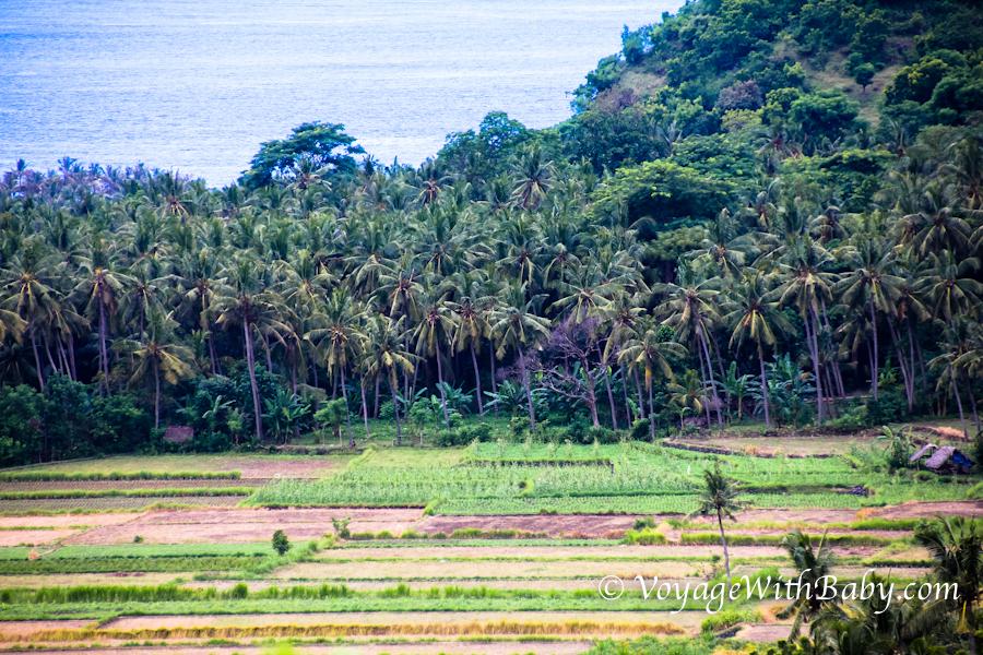 Пальмы, океан и рисовые поля - это остров Бали