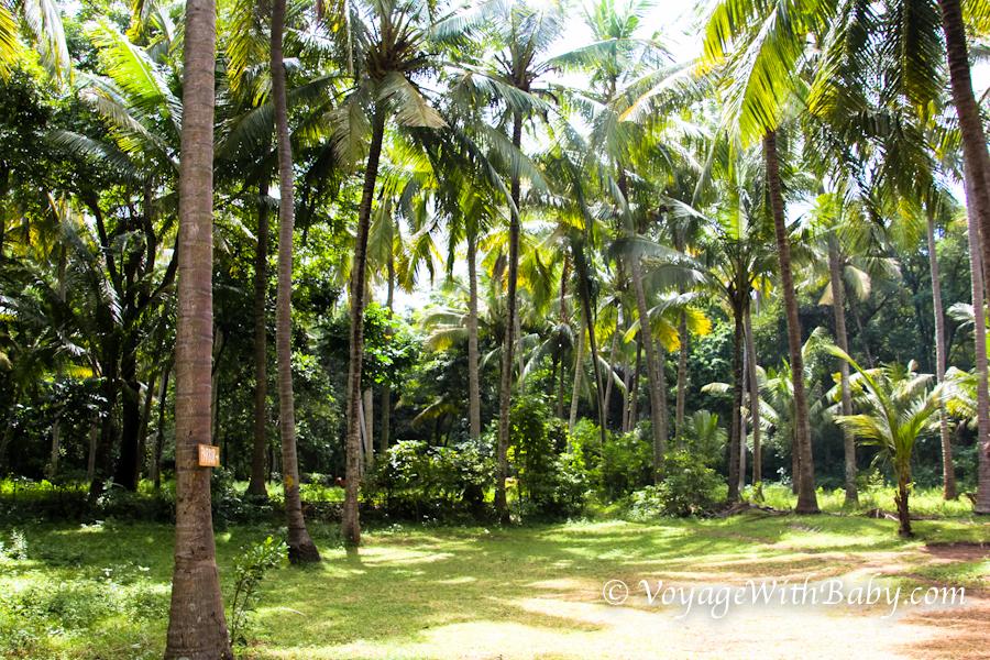 Пальмовая роща на Бали