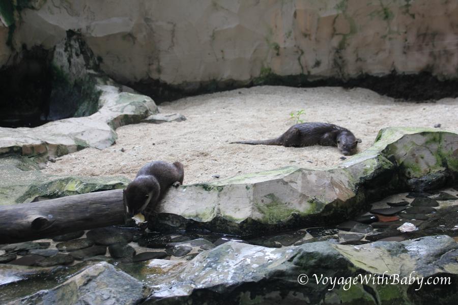 Выдры в зоопарке на Бали