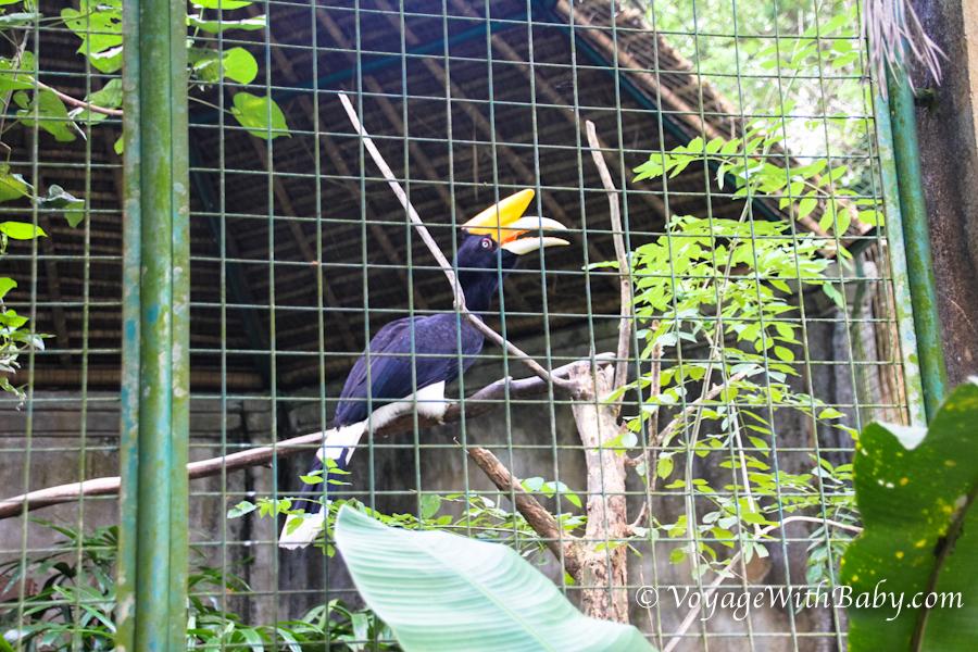 Птица носорог в Бали зоо