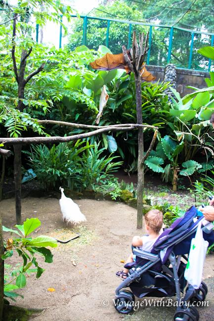 Калонг - летучие лисицы в зоопарке на Бали