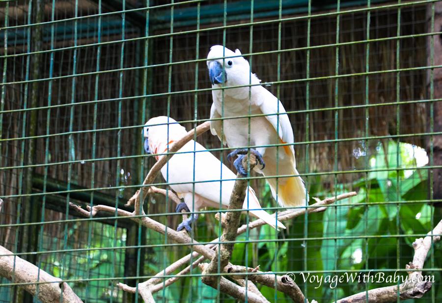 Зоопарк Bali Zoo на острове Бали