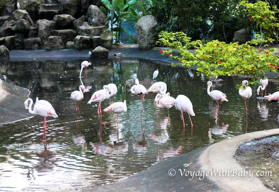 Парк Птиц в Куала Лумпуре - фламинго