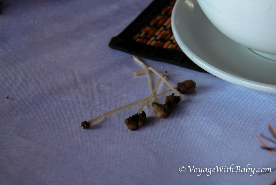 Галюциногенные гриб на Бали