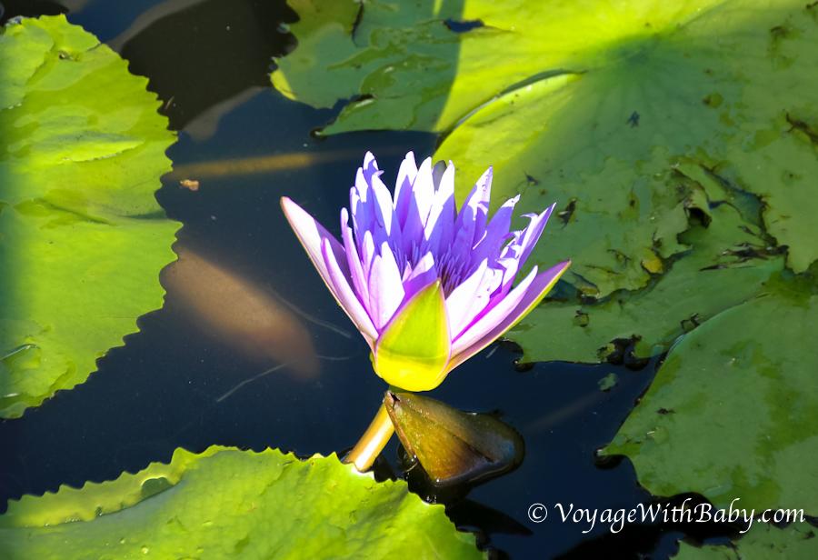 цветочек на Бали
