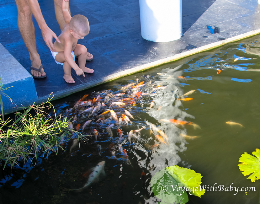 Ребенок кормит рыбок