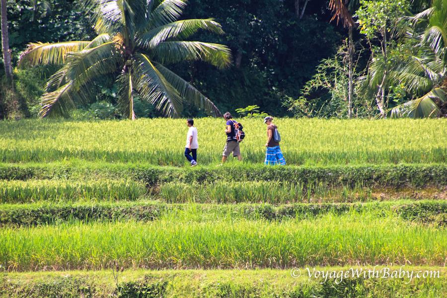 Рисовые террасы Тегаллаланг около Убуда на Бали (Tegallalang Rice Terraces)