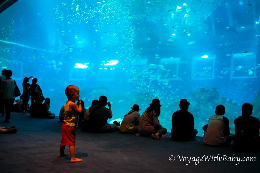 Океанариум в Сингапуре Marine Life Park (S.E.A Aquarium)