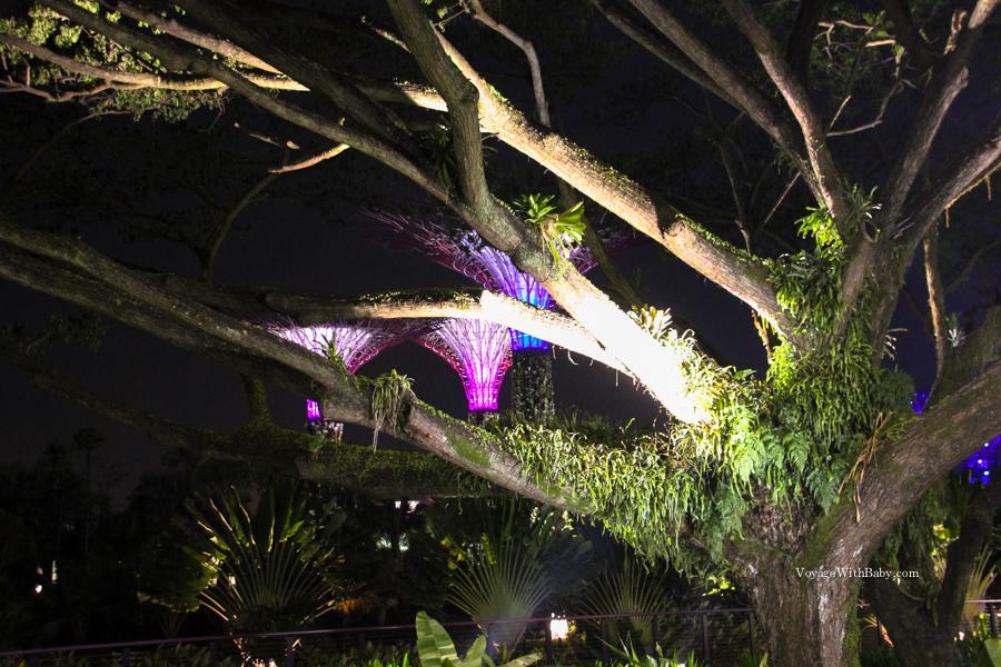 За обычными деревьями виднеются супердеревья