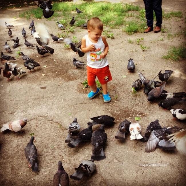 Малыш и голуби